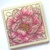 Colour Me Camellia A6 Red Rubber Stamp